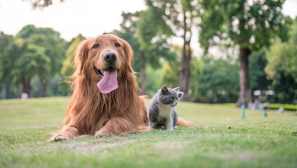 Happy pets laying on the grass